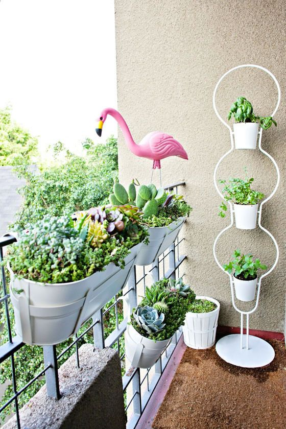 Apartment Balcony Succulent And Cacti Garden Balcony Planters Balcony Flowers Balcony Plants