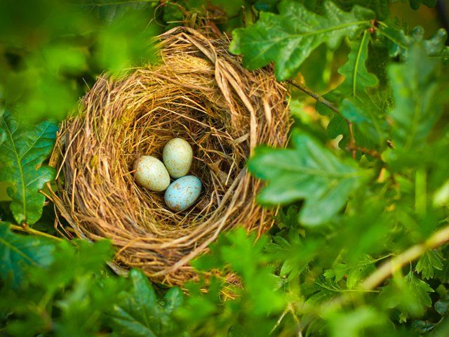 Many Of These Images Are Part Of Our Free Wallpaper And Free Screensavers Bird Eggs Bird Nest Birds Bird nest wallpaper hd