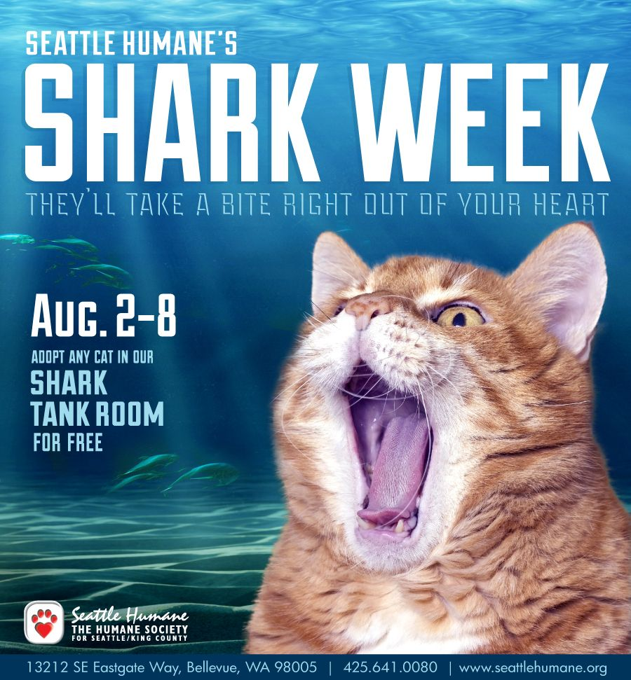 Fan Of Shark Week What About Clever Feisty Cats The Discovery Channel Has Nothing On Our Sharks They Ll Take A Bite Shark Week Shark Tank Humane Society