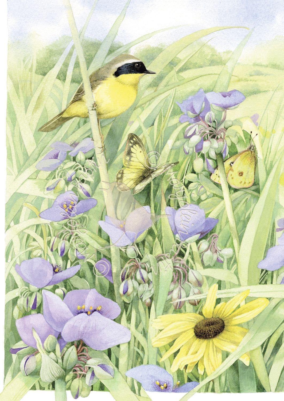 Summer Abundance Disegno fiori, Arte con acquerelli e