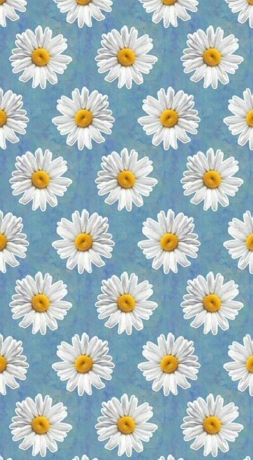 Daisy Wallpaper ! wallpaper background Wallpaper