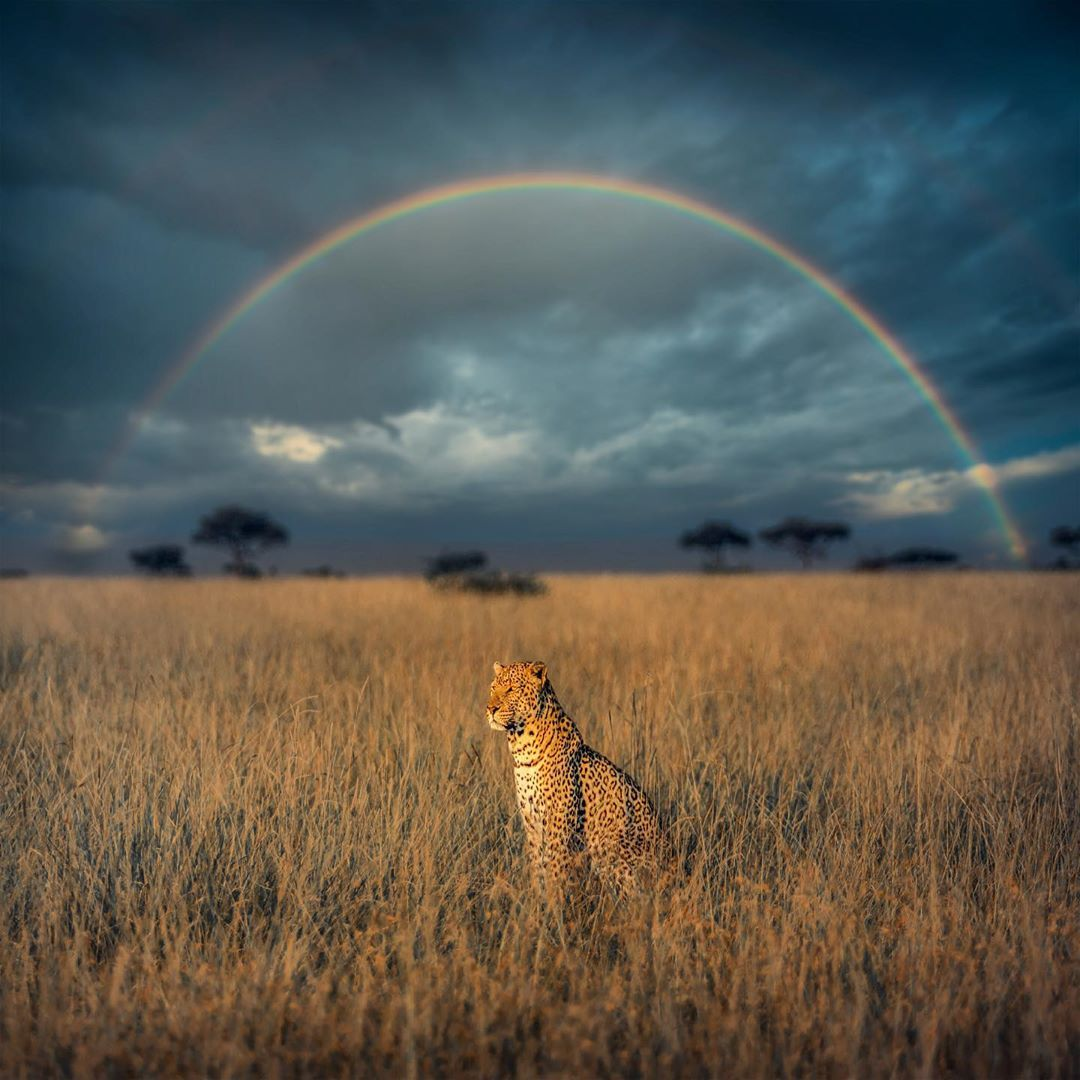 Leopard under the rainbow NatureIsFuckingLit Cute dog