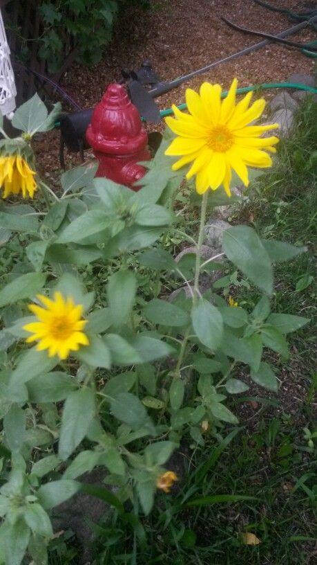 Bird seed flowers....lol