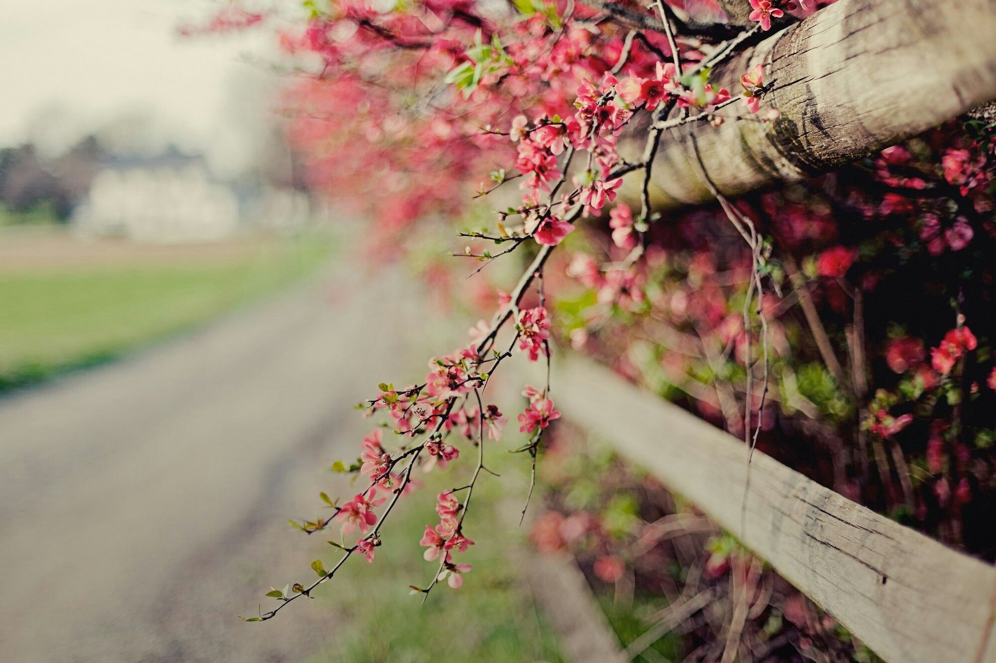 Dslr Background Editing Flowers Wallpaper Fence