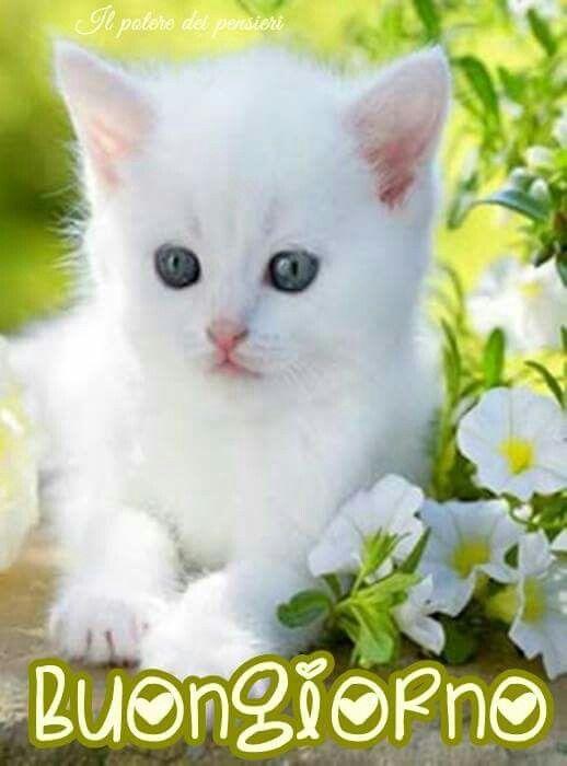 Buongiorno gatto buongiorno katzen s e baby tiere e for Buongiorno con gattini
