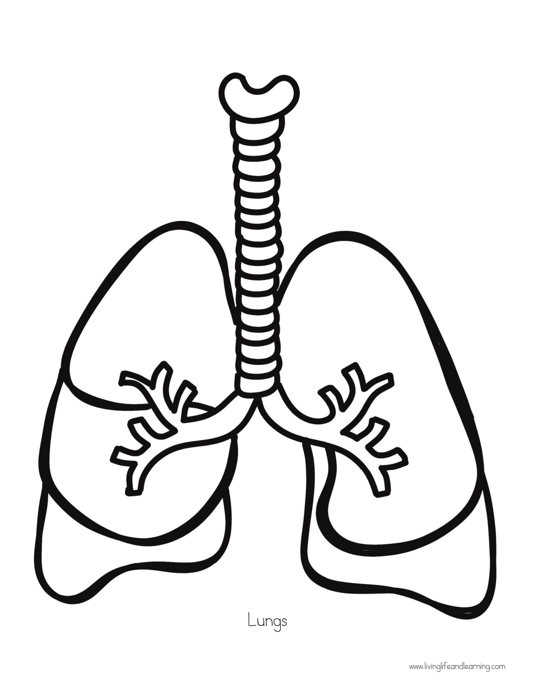 Akciğer Iç Organlar Pinterest Science Education Ve Human Body