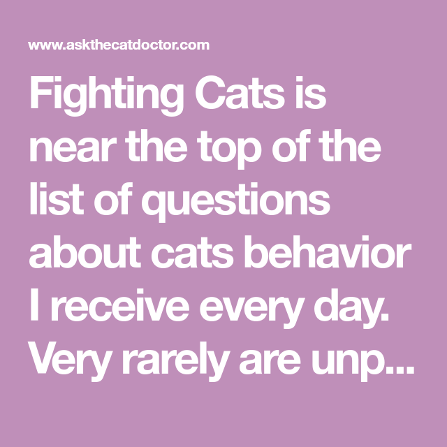 Fighting Cats Is Near The Top Of The List Of Questions About Cats Behavior I Receive Every Day Very Rarely Are Unprovoked Cats Cats Cat Behavior Outdoor Cats
