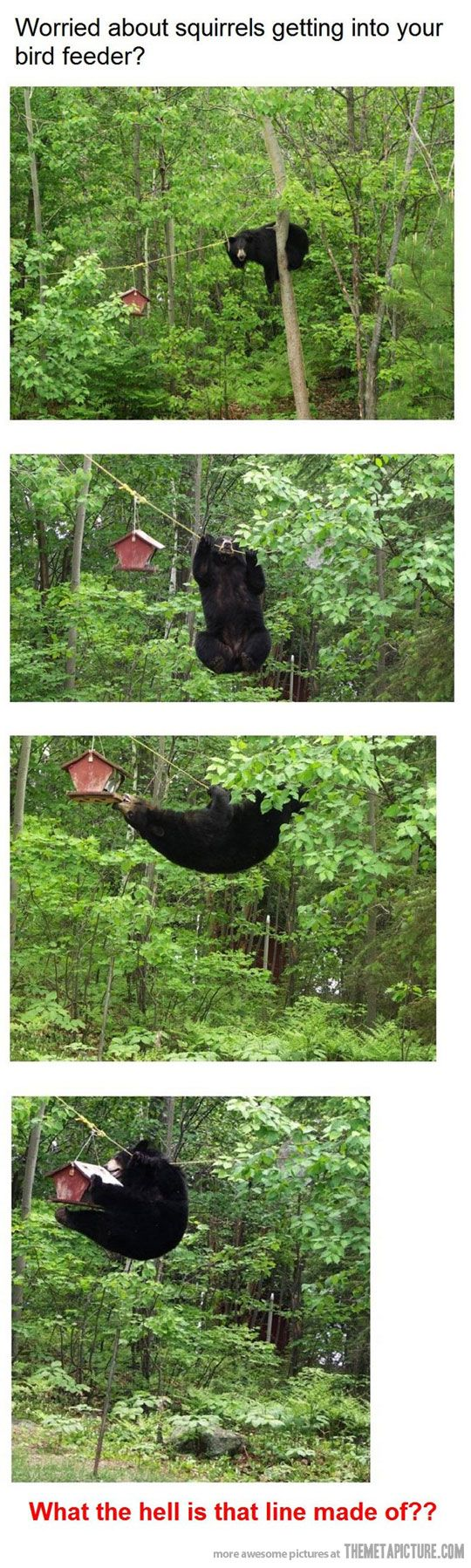 funny-bear-bird-feeder-house