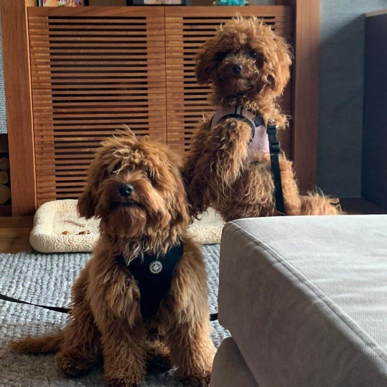 #dogsofinstagram #dog #doglover #dogs #doglovers #dogoftheday #dogstagram #doglife #doglife #dogphotography #dogslife...