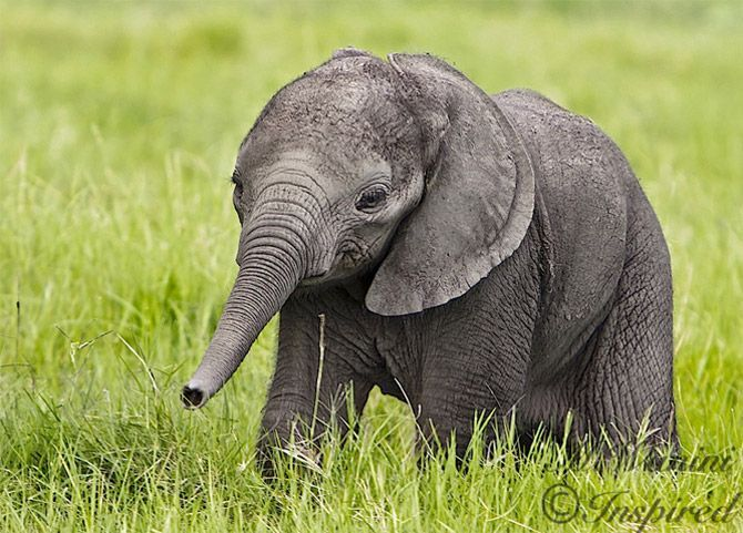 I love baby elephants so much. Tell me this isn't adorable. Go ahead, try.