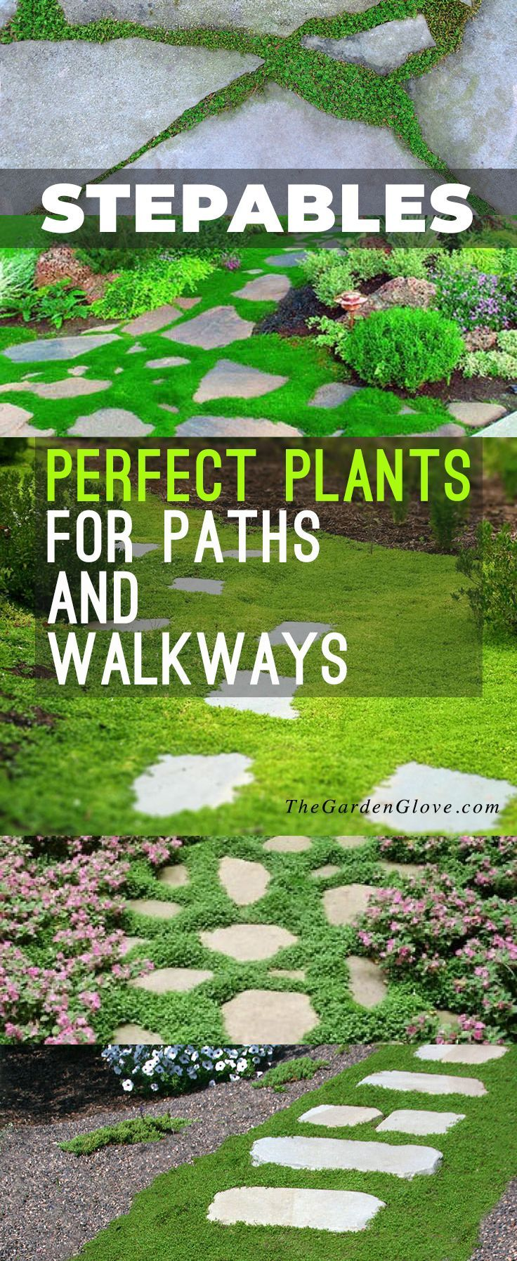 Diy garden ideas pinterest  Stepables Perfect Plants for Paths and Walkways  DIY Gardening