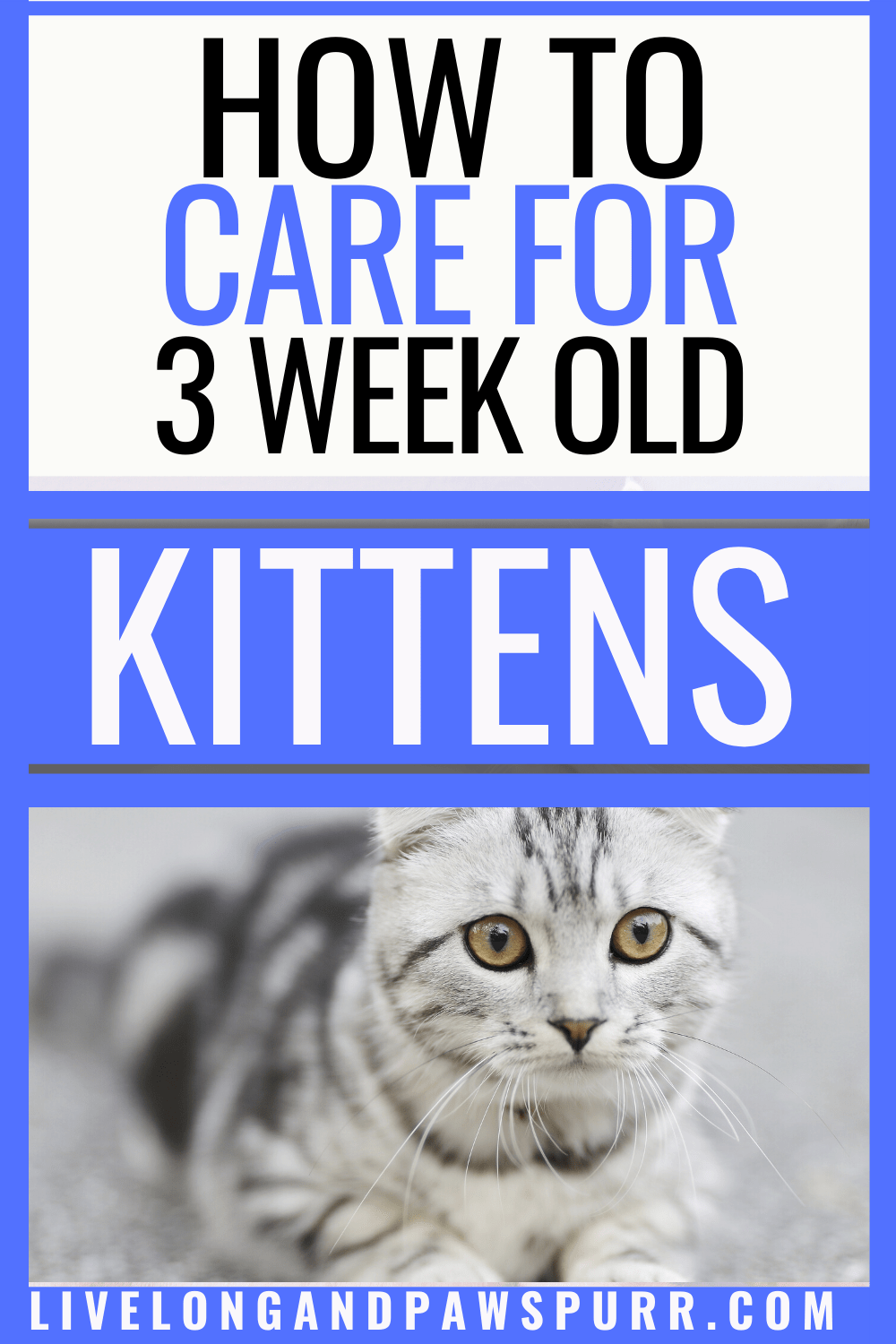 The Simple Guide To Caring About Three Week Old Kittens Live Long And Pawspurr In 2020 Kitten Care Pet Care Cats Kittens