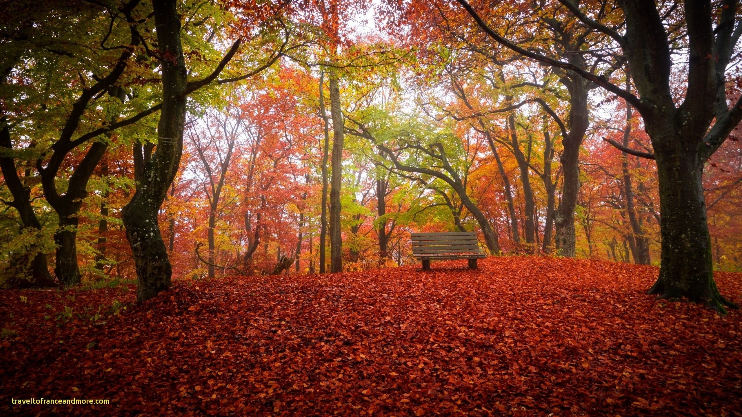 Best Of Free Autumn Desktop Wallpaper Downloads Latar Belakang Latar Belakang Animasi Musim Gugur