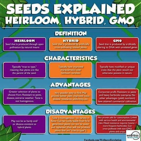 Seed Are Our Food Heirloom V Hybrid Gmo I Ve Bookmarked For Future Reference A We Do Not Know If Thi The Whole Truth There To It You Genetically Modified Advantage And Disadvantage Essay