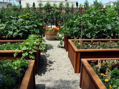 Amazing Vegetable Garden Design Backyard Vegetable Garden 640 x 480