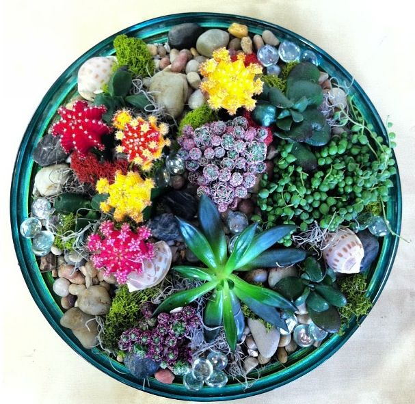 Succulents and moon cacti dish garden In House Garden Design