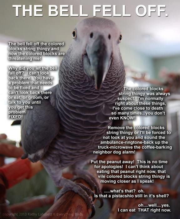 Pin By Roberta Bray Enhus On Our Feathered Kids Fids