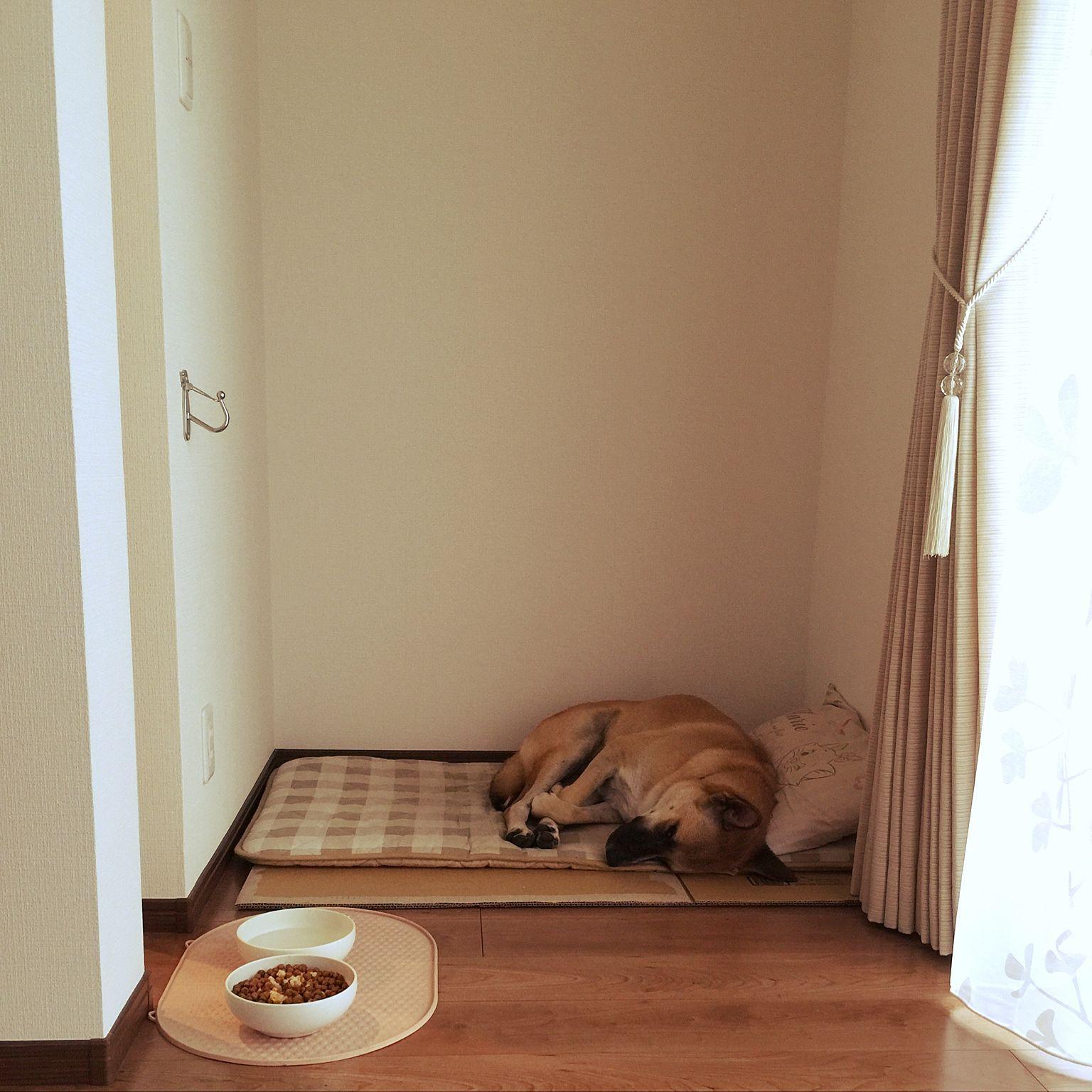 犬と暮らすリビング の画像検索結果 犬と暮らす家 ドッグハウス リビング
