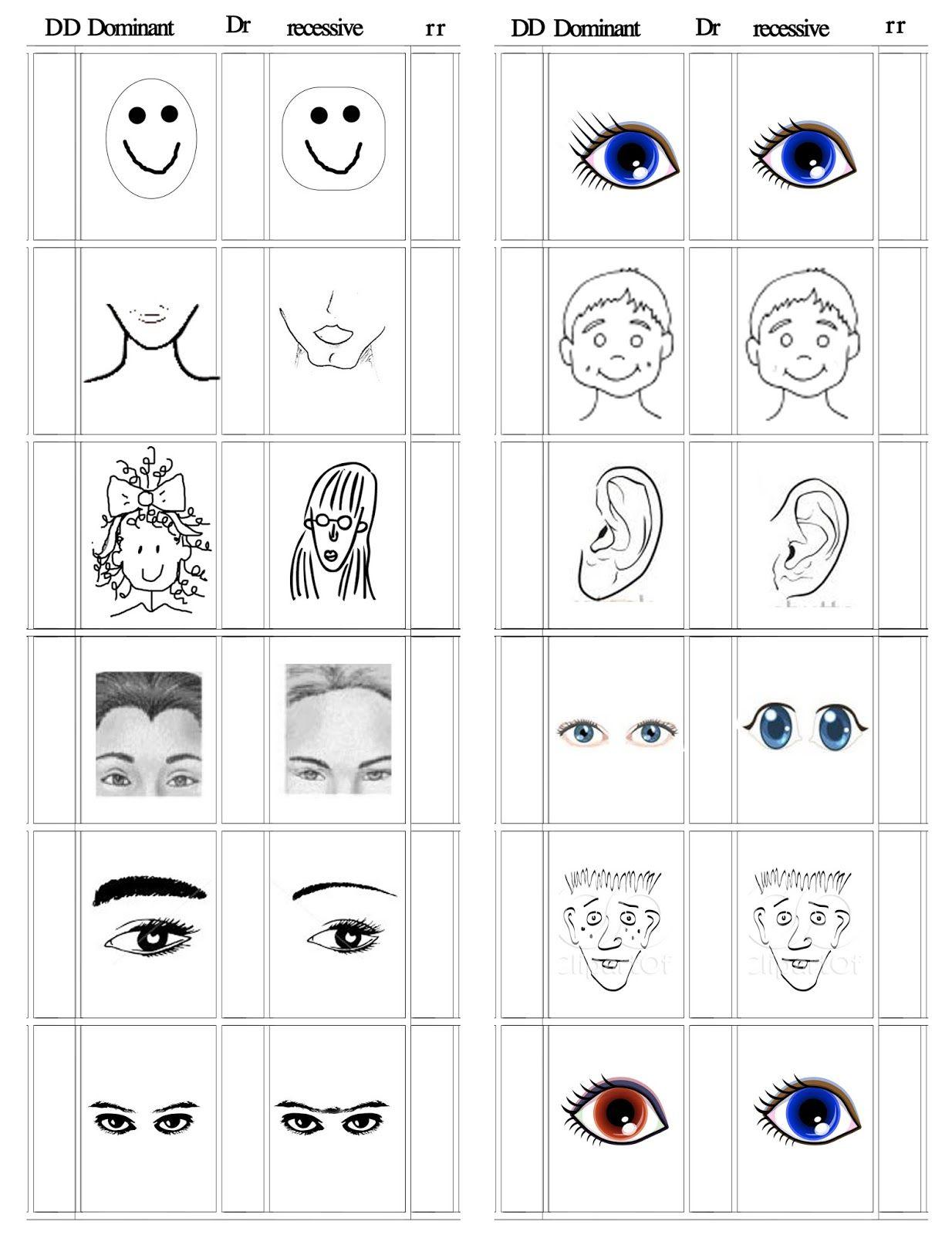 Genetics Preschool Worksheets For Kids Fun Worksheets For Kids Fun Worksheets [ 1600 x 1234 Pixel ]