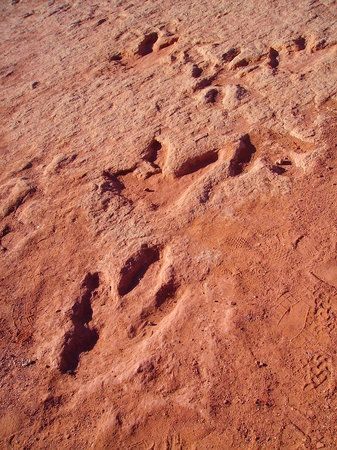 Photo of Dinosaur Tracks