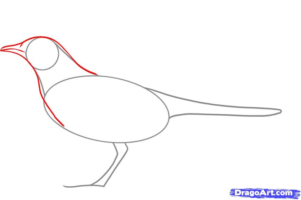 Mockingbird Line Drawing Google Search Drawings Guided Drawing Line Drawing
