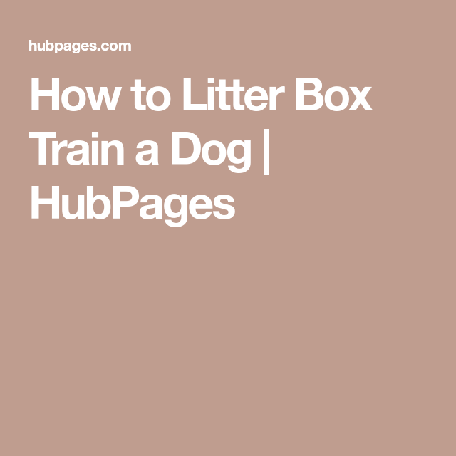 How To Litter Box Train A Dog