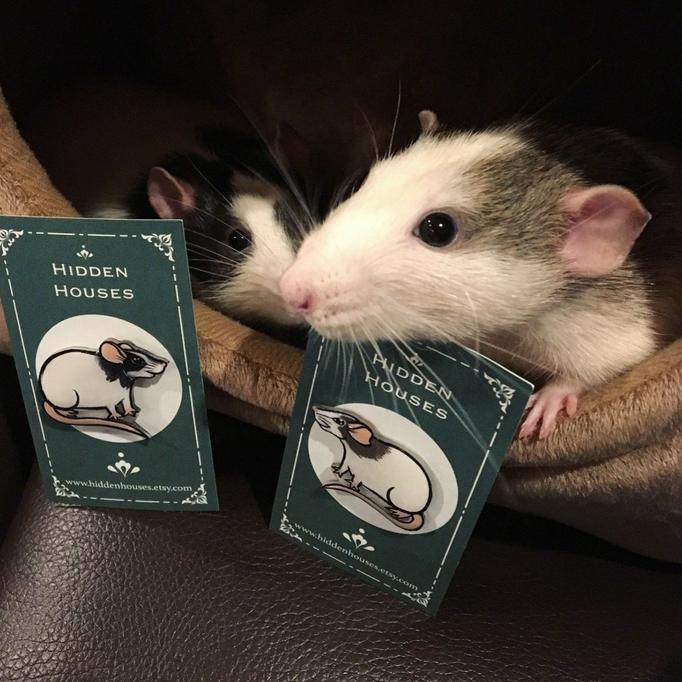 Custom Pet Rat Portrait Pin/Brooch/Badge Pet rats, Pets