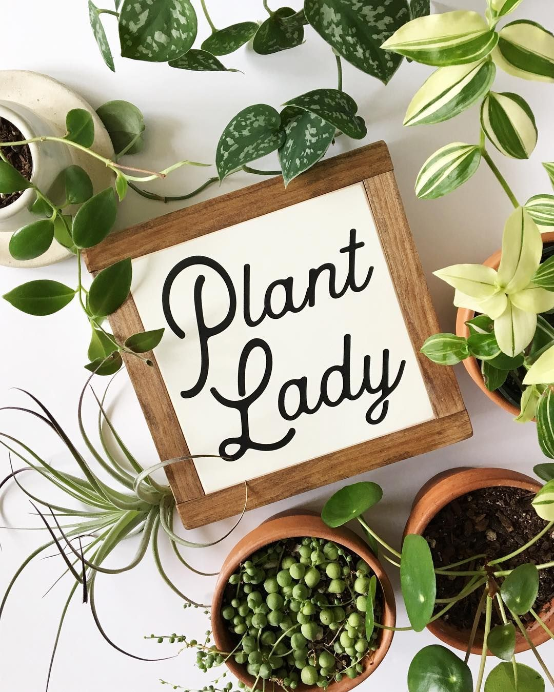 Pine And Birch Crazy Plant Lady Plant Lady Plant Signs 640 x 480
