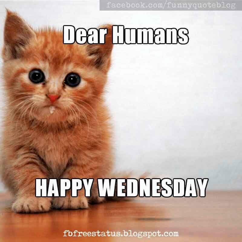 It\'s Wednesday, Funny & Happy Wednesday Meme with Wednesday ...