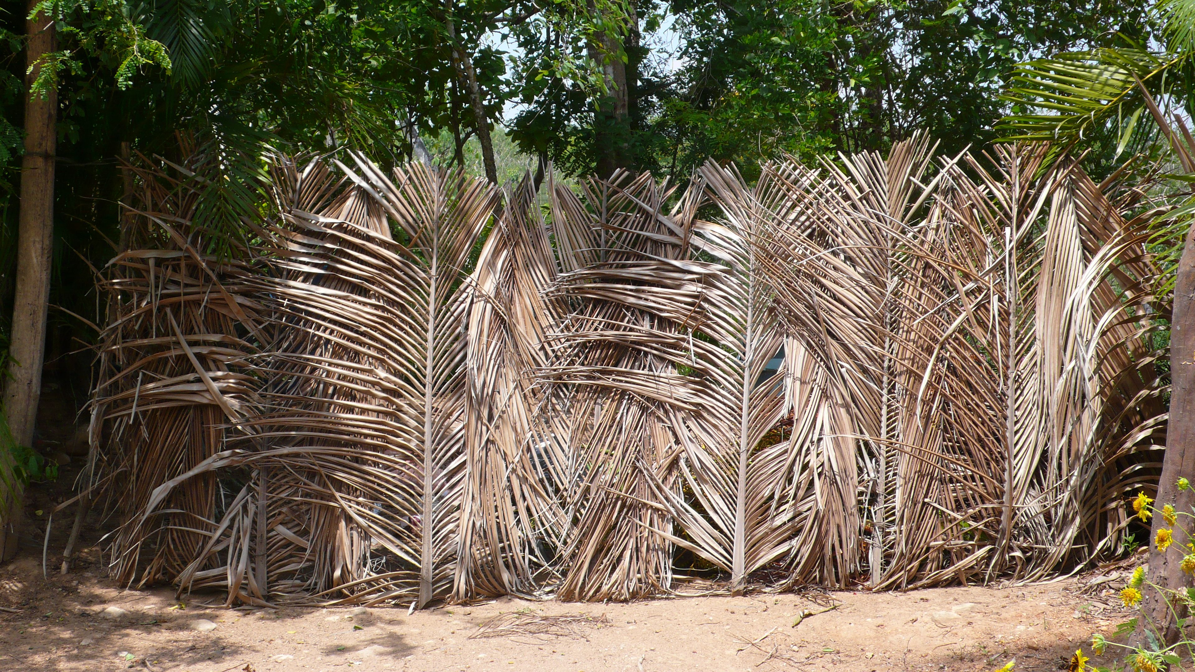 Pin By Priscilla Woolworth On Mexico Front Yard Fence Fence Gate Fence Landscaping