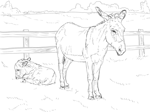 Donkey With Baby Coloring Page Free Printable Coloring Pages Horse Coloring Pages Baby Coloring Pages Farm Animal Coloring Pages