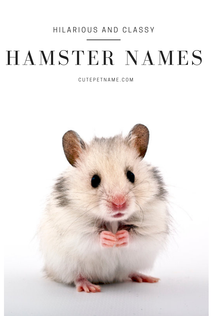 50 Hilarious And Classy Hamster Names For You To Choose From Hamster Names Funny Hamsters Cute Pet Names