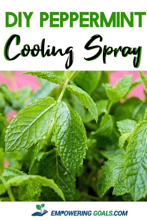 Homemade Cooling Spray With Essential Oils Peppermint Cooling