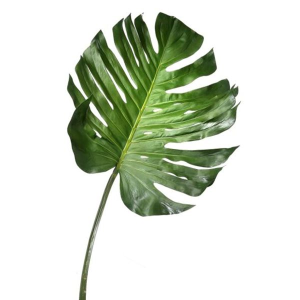 Feuille de philodendron 55 recherches vegetation dessin feuille de monstera dcors vronneau altavistaventures Image collections