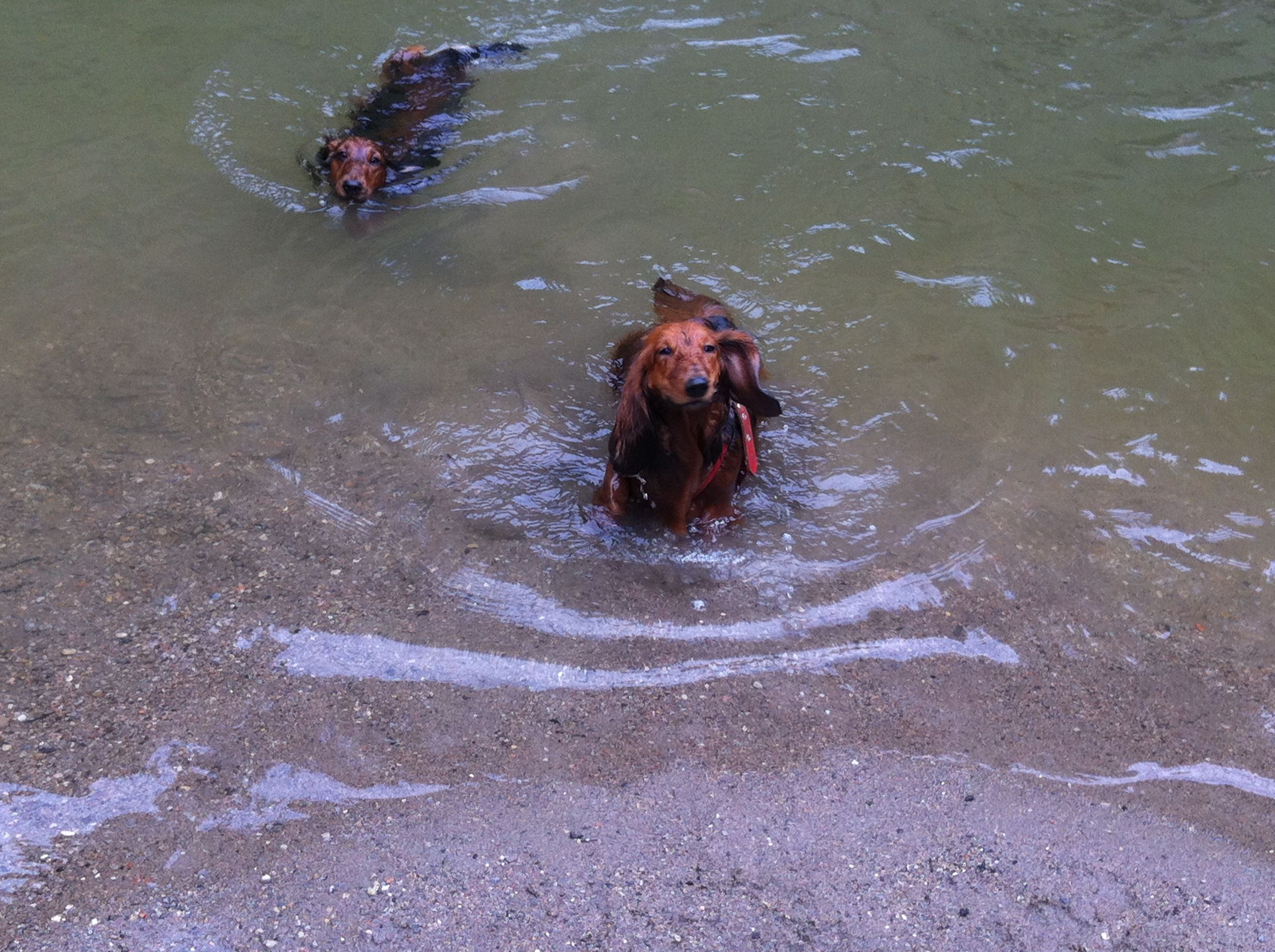 Lisa and Max going for a swim!