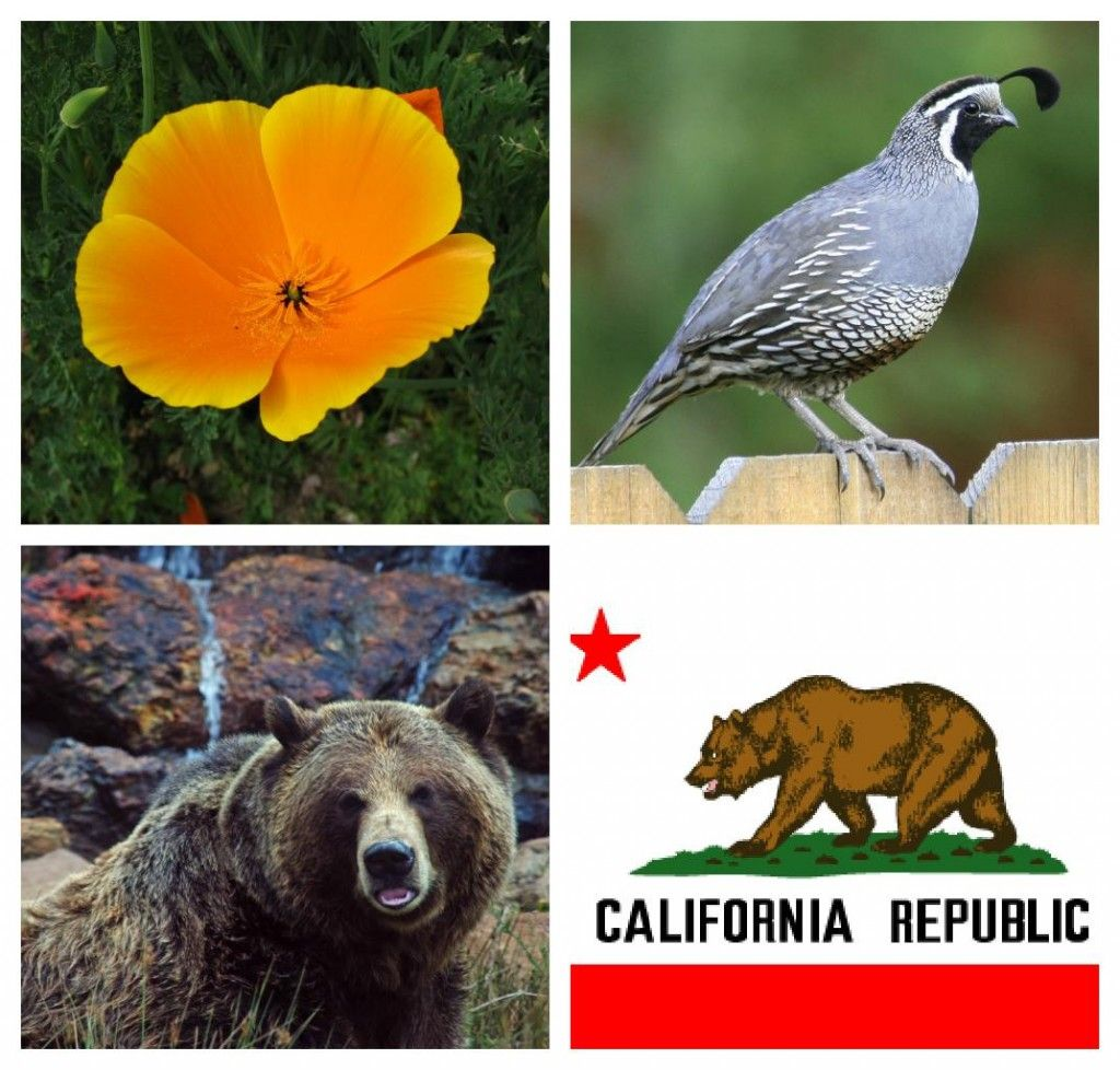 Free Printable For California State Symbols And Geography