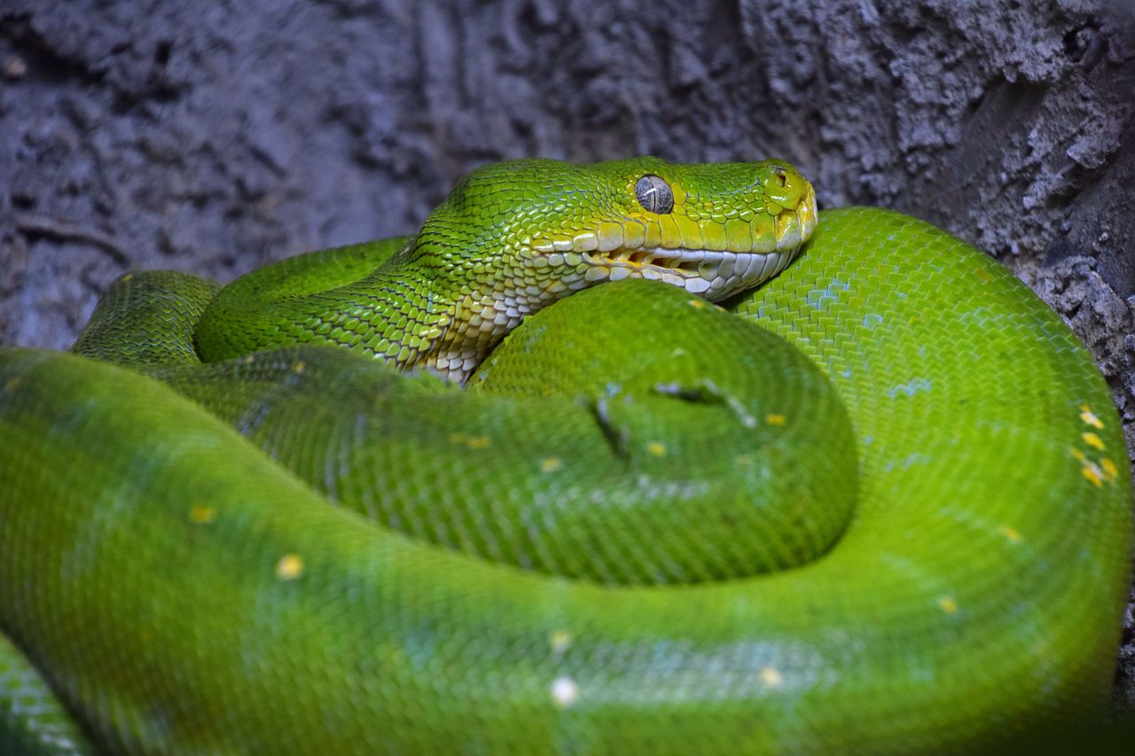 Beautiful Green Snake Close Up Beautiful Beauty In Nature Chordata Close Up Cute Day Green Green Color Green Color Green Small Snakes Animals Animals And Pets