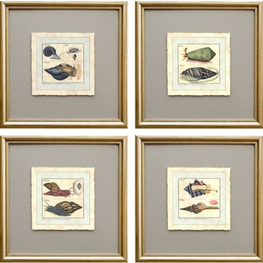 Phoenix galleries shell framed prints shell series with