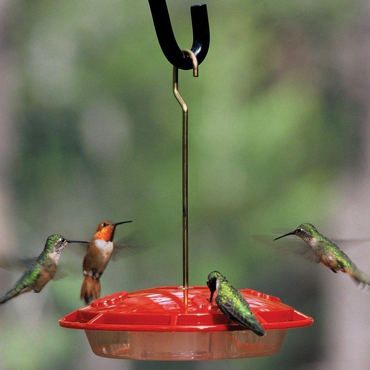 Hummzinger Ultran Hummingbird Feeder Feeder Hummingbird Hummzinger Ultran In 2020 Humming Bird Feeders Wild Bird Feeders How To Attract Hummingbirds