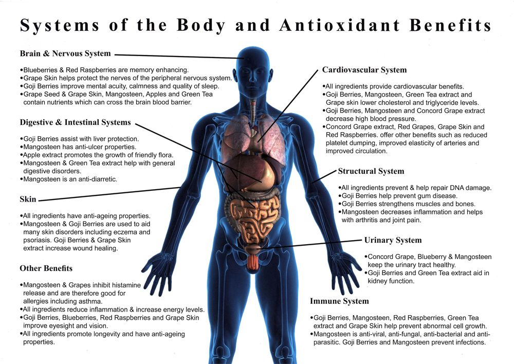 systems of the body and antioxidant benefits | health, etc, Muscles