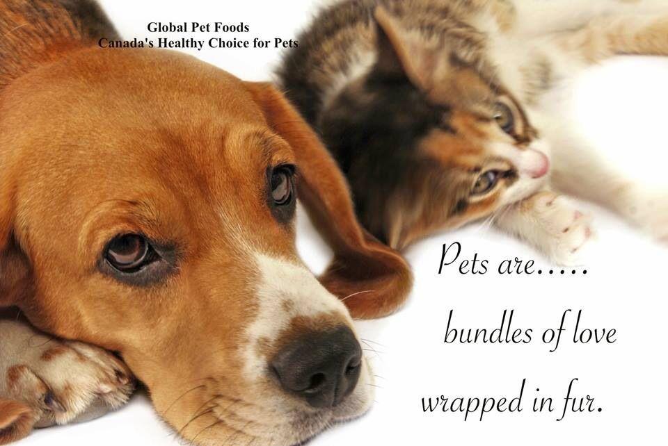 Pin By Deborah Lynes On Animals Animals Animals Holistic Pet Care Healthy Pets Pet Safe