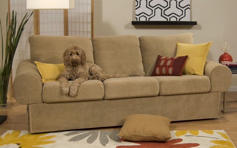 A Beige Dog Laying On Beige Couch To Demonstrate Pet Friendly