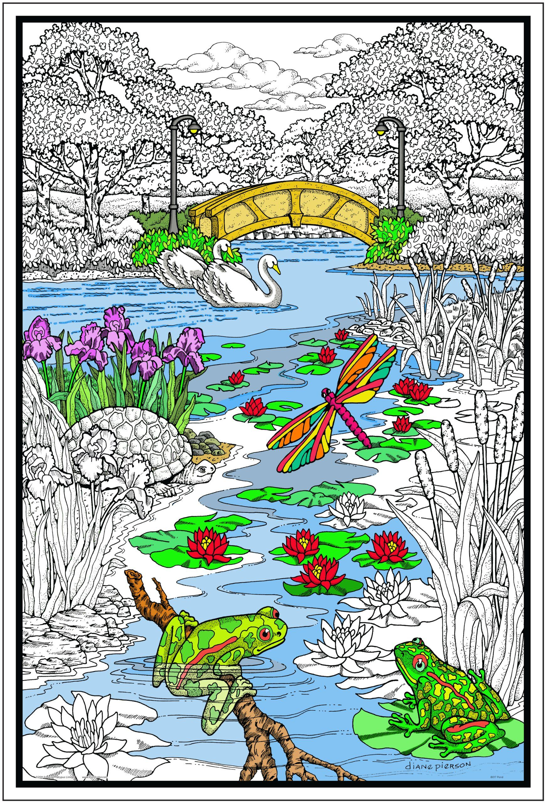 Pond in the Park - Giant 22 X 32.5 Inch Line Art Coloring Poster ...
