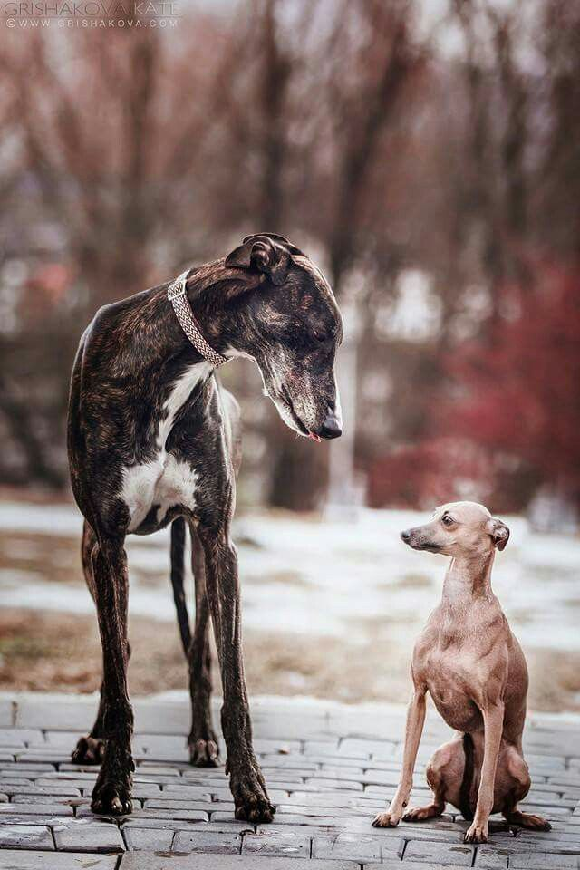 New Friends Reminds Me Of Flare And Captain Galgo Pobre