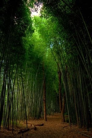 Bamboo Garden Would Love To Hear My Music And Sit Here A While
