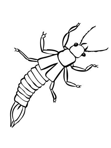 Pin By Kim Macdonald On Bugs Bees And Butterflies In 2020 Earwigs Insect Coloring Pages Coloring Pages