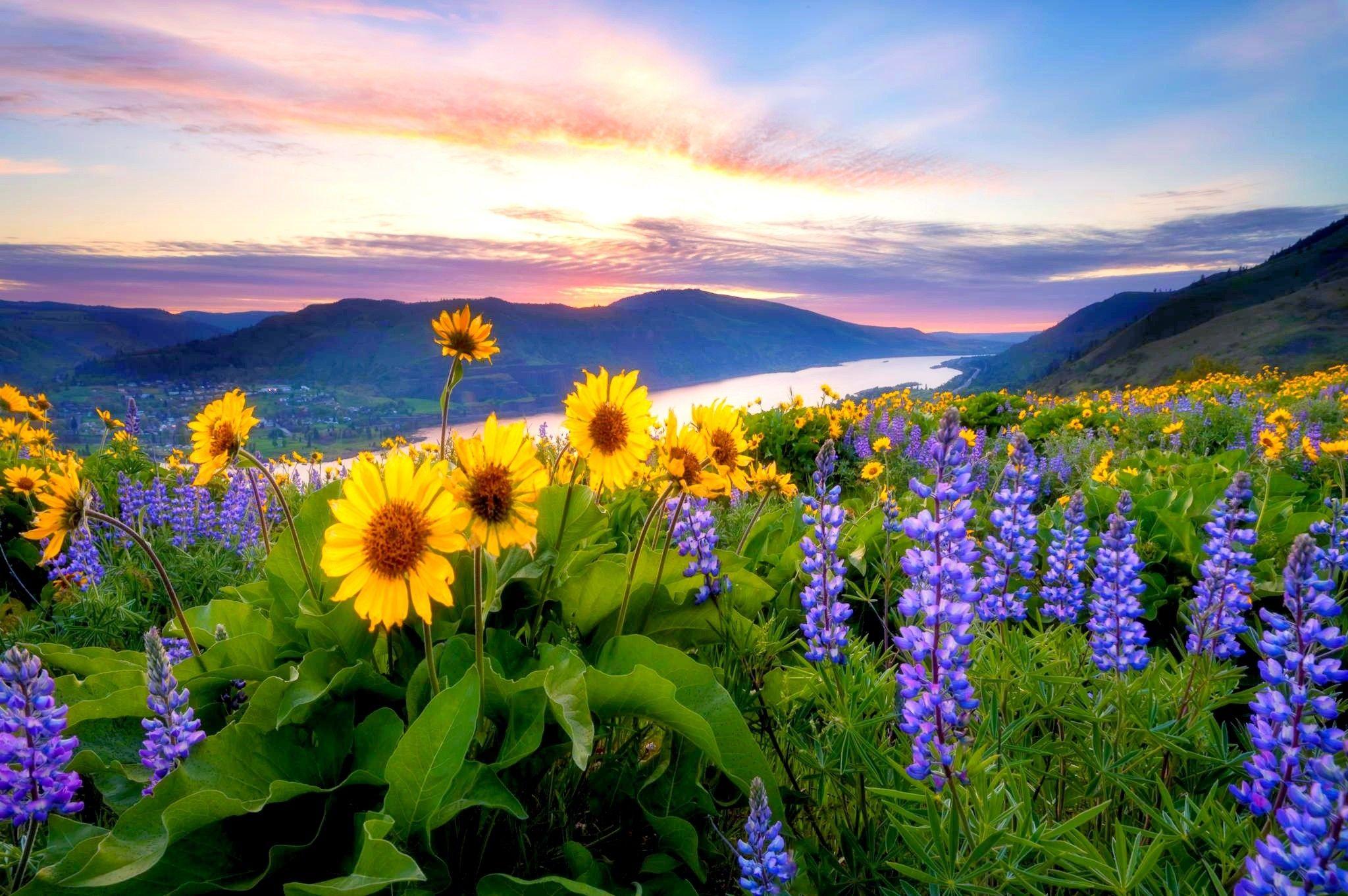 Flores Hermosas Flores Silvestres Fondos De Pantalla Gratis: Flores Silvestres Antes Del Amanecer Salida Del Sol