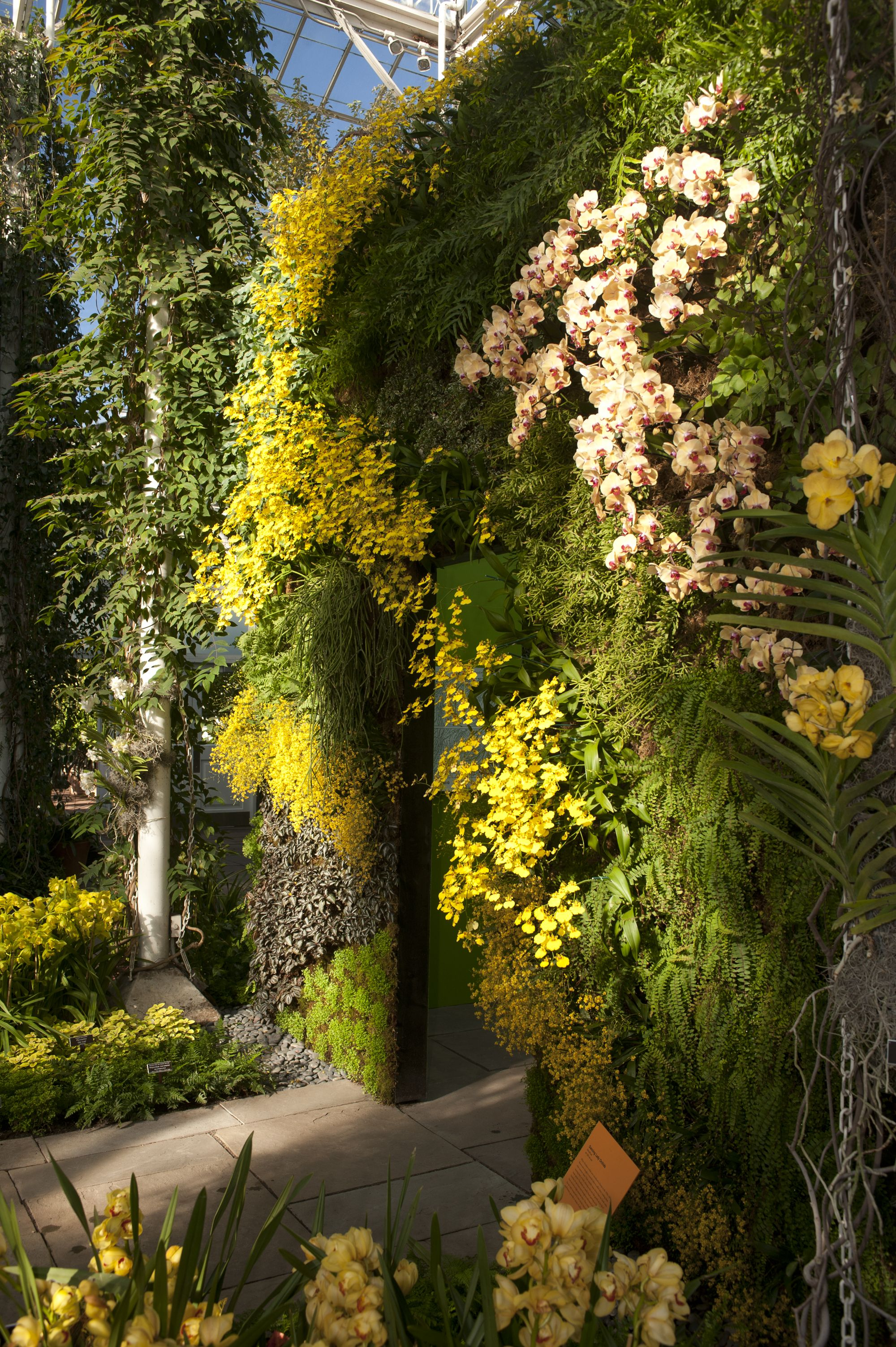 The 10th Annual Orchid Show | Gardens | Pinterest | Orchid and Plants