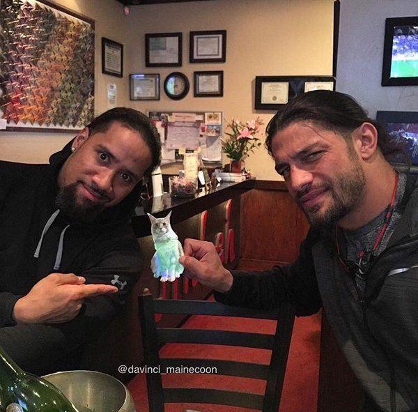 Daij On Roman Reigns Family Roman Reigns Wwe Superstar