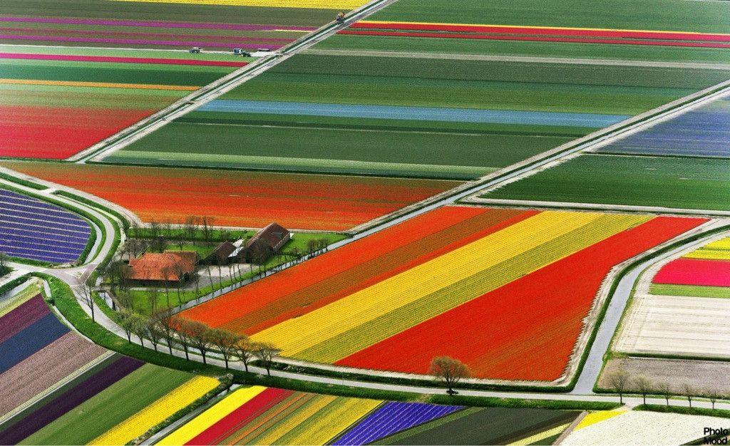 C'est une ferme de tulipe